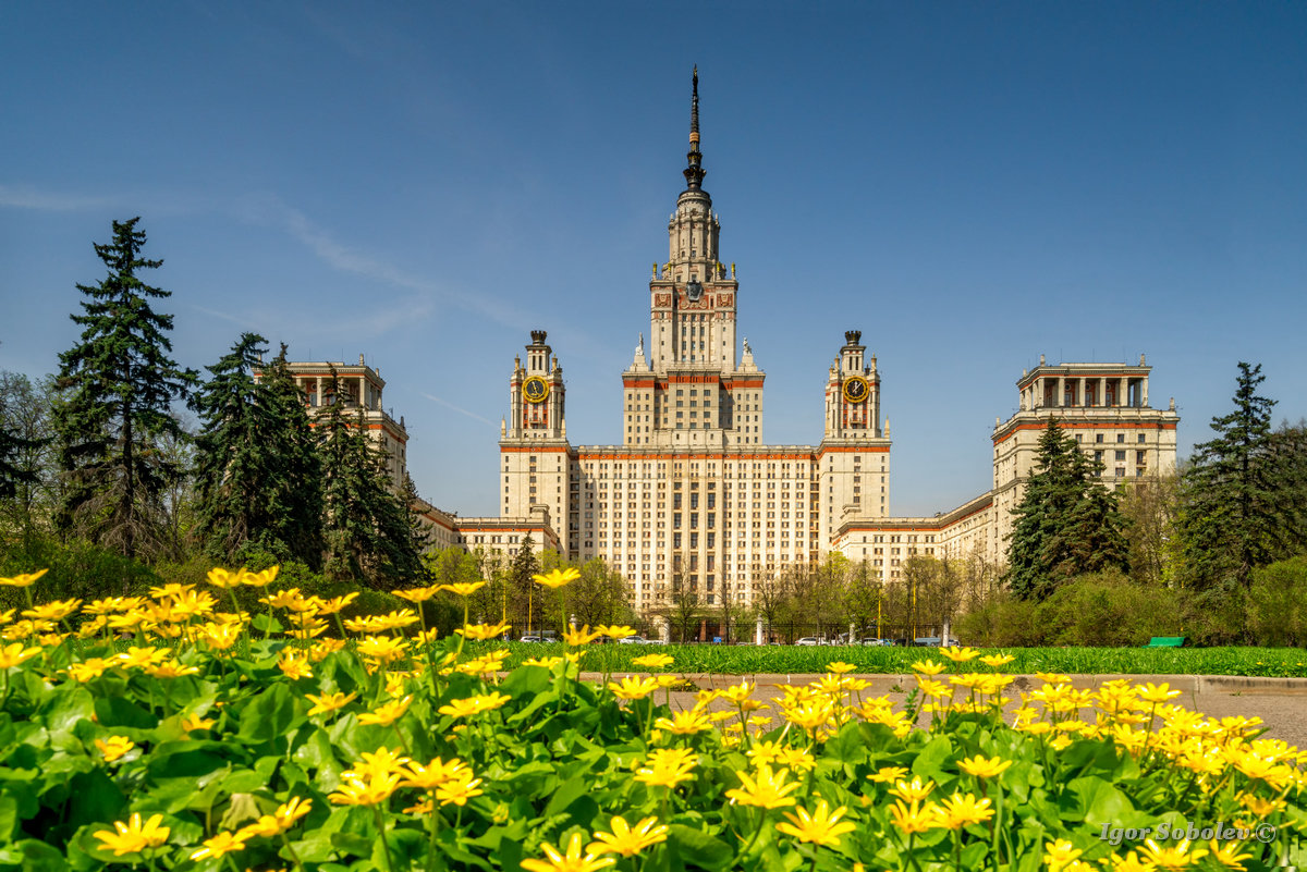 The main building of Moscow State University on a background of yellow flowers