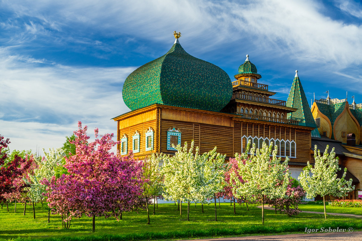 Moscow, Russia - May 27, 2017, cherry orchard near the palace of Alexei Mikhailovich in the morning Kolomensky