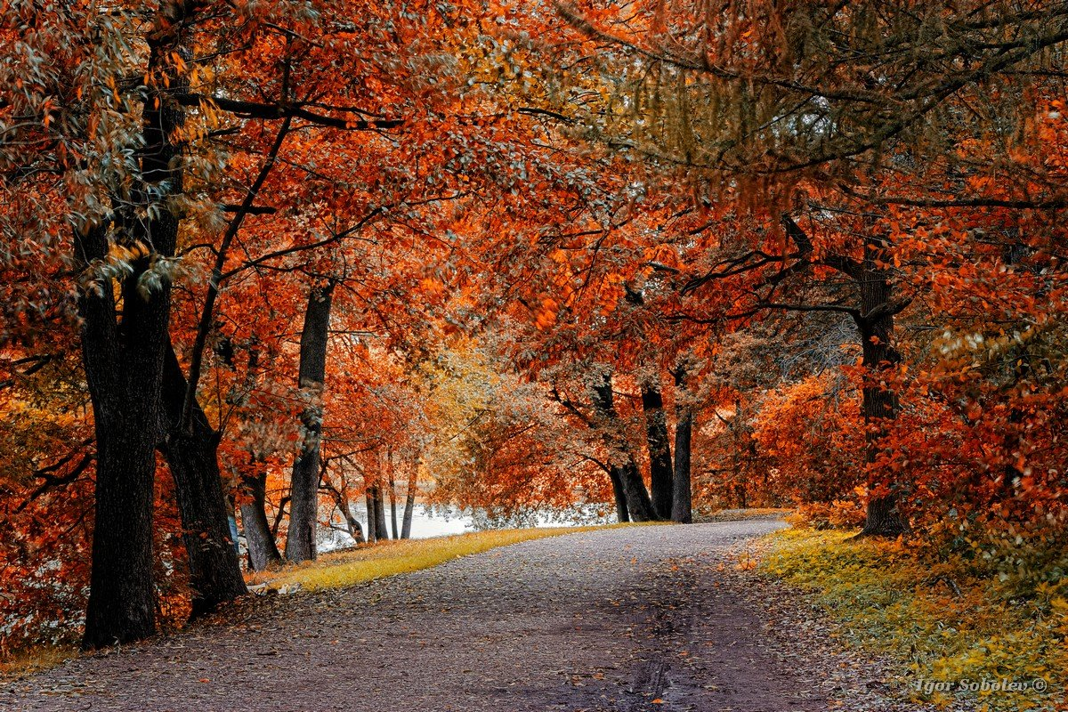 Trees with autumn leaves in the park