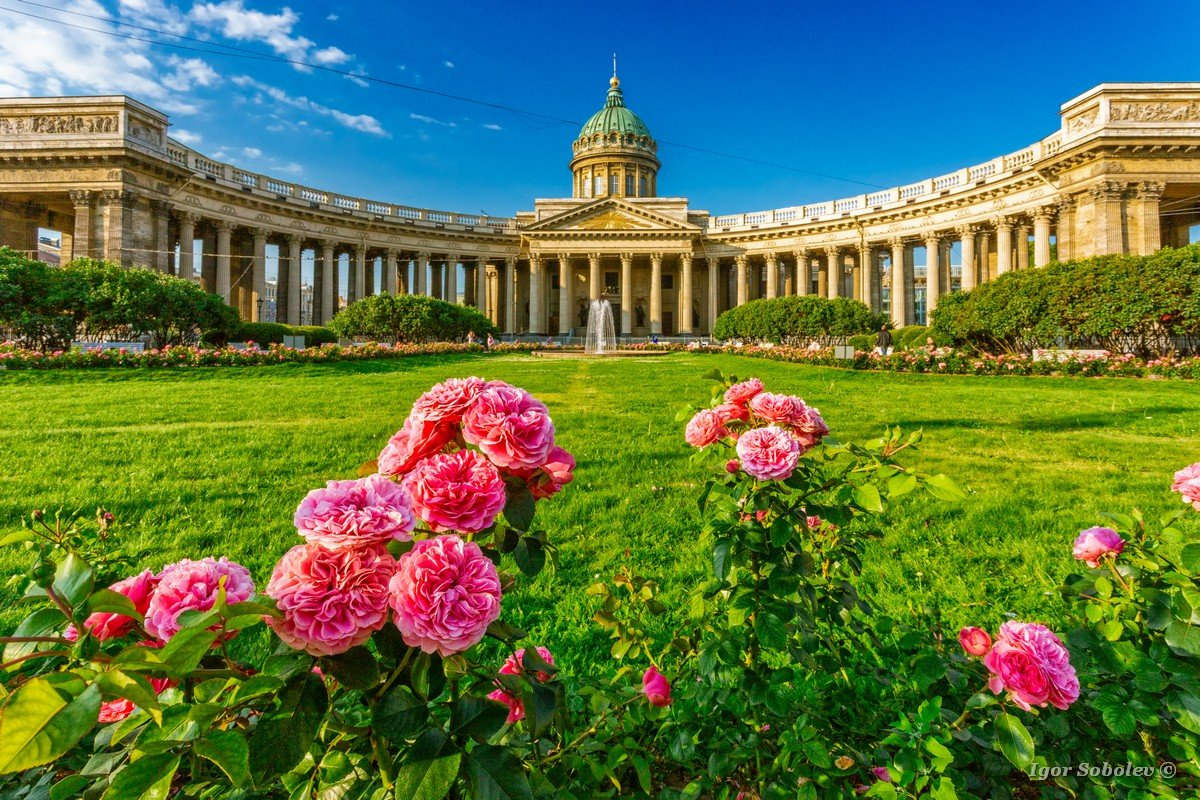 Roses at the Kazan Cathedral in St. Petersburg