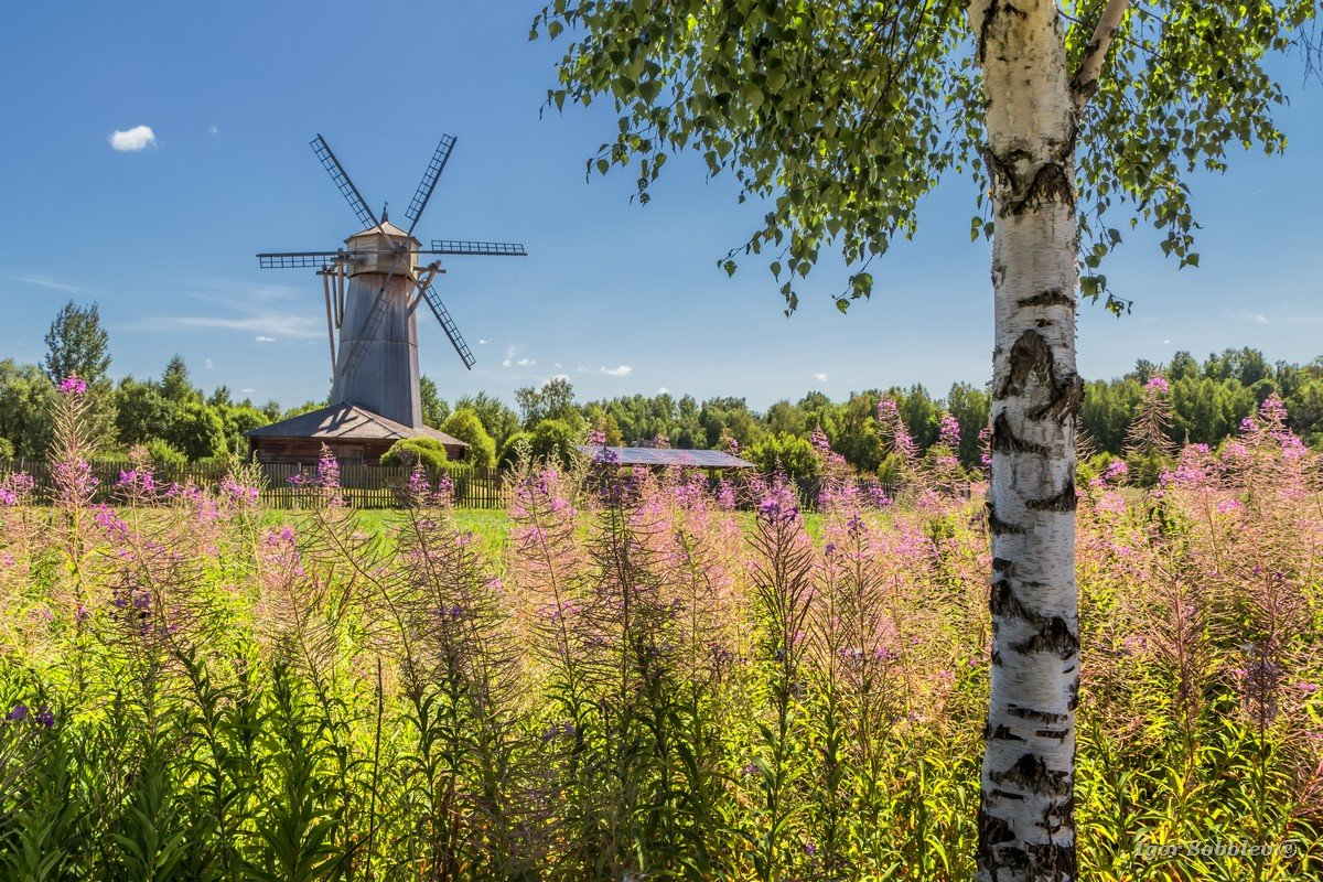 Summer landscape with a mill and birch