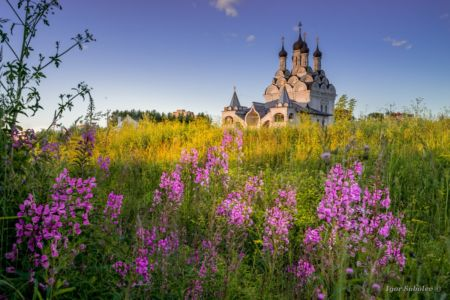 The Church of the Annunciation in Taininskoye with lupins