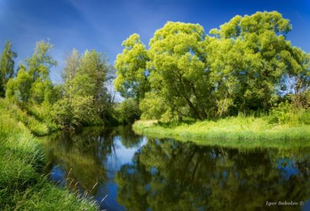 Summer landscape with green trees, and a river