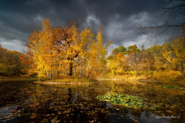 Осень в Сокольниках